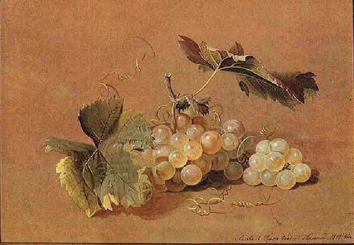 Ветка винограда. Натюрморт. (1817). Автор: Ф.П.Толстой.