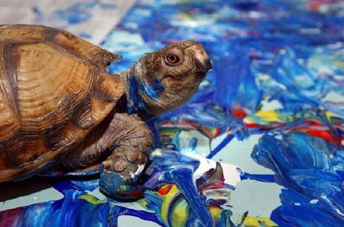 Черепаха-художница Купа.  |Фото: zooblog.ru.