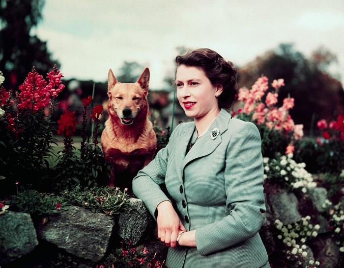 Елизавета, 1953 год