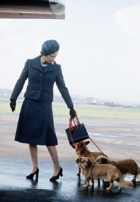 Елизавета II с собаками в аэропорту Абердина, 1974 год