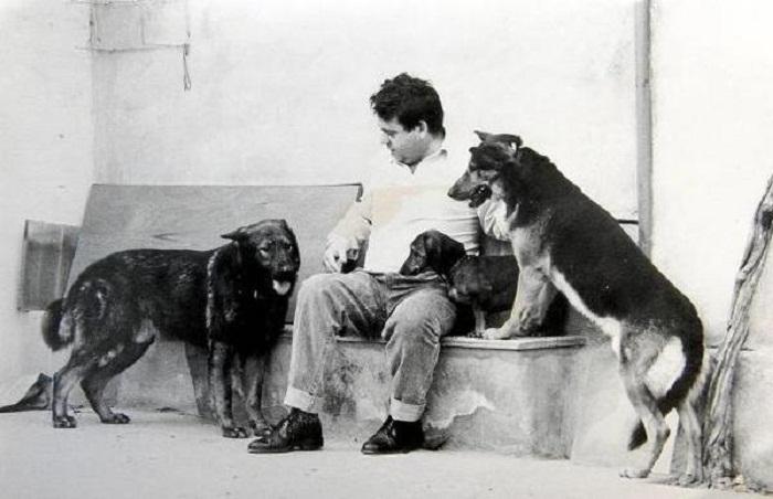 Собаки, взятые в семью