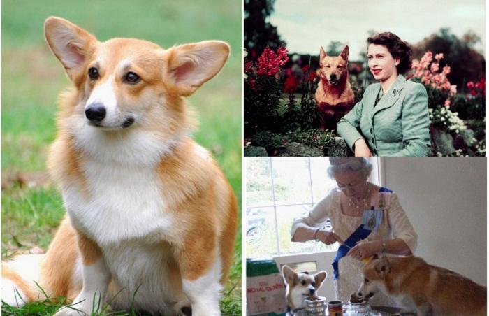 Королева Елизавета II и ее очаровательные корги