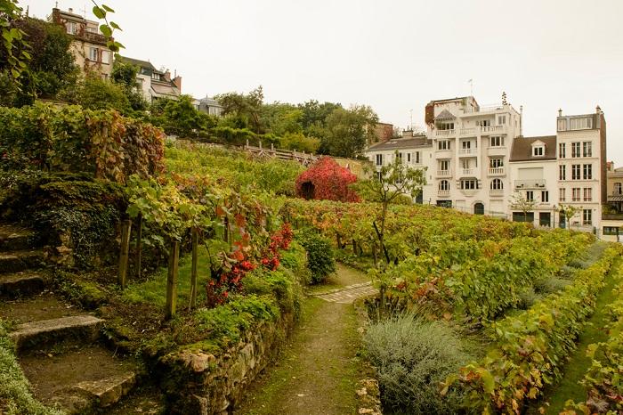 Виноградник Монмартра,Le Clos Montmartre