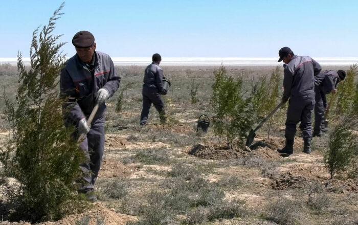 Попытки оживить пустыню на дне высохшего озера. /Фото: cdn1.img.sputniknews-uz.com