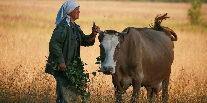 Чтобы обезопасить домашний скот от нечистой силы, в рога закладывали ртуть. /Фото: i.pinimg.com