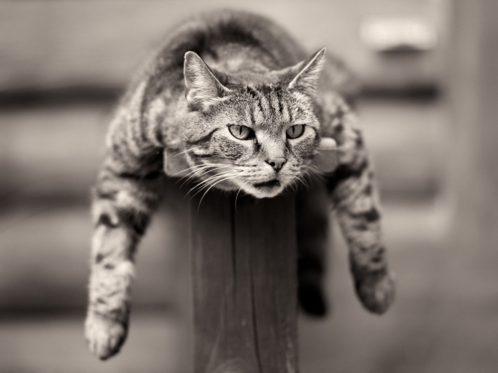 Своего кота Поддубный назвал Раулем. /Фото: sky-wall.ru