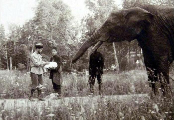 Николай II выгуливает своего слона./Фото: fotopin.ru