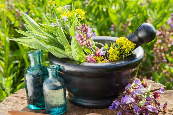 Для лечения на Руси использовались лекарственные растения. /Фото: static.mk.ru