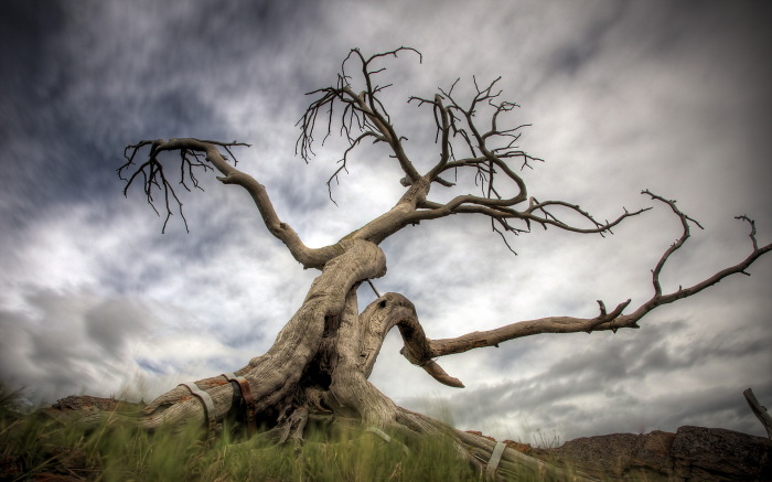 Корявые деревья называли еще пьяными. /Фото: img1.badfon.ru