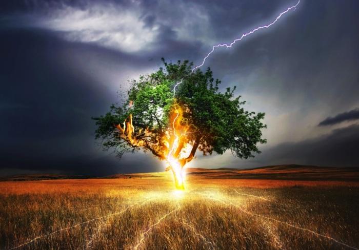 Бог Перун мог метнуть огненную стрелу в одинокое дерево. /Фото: attuale.ru