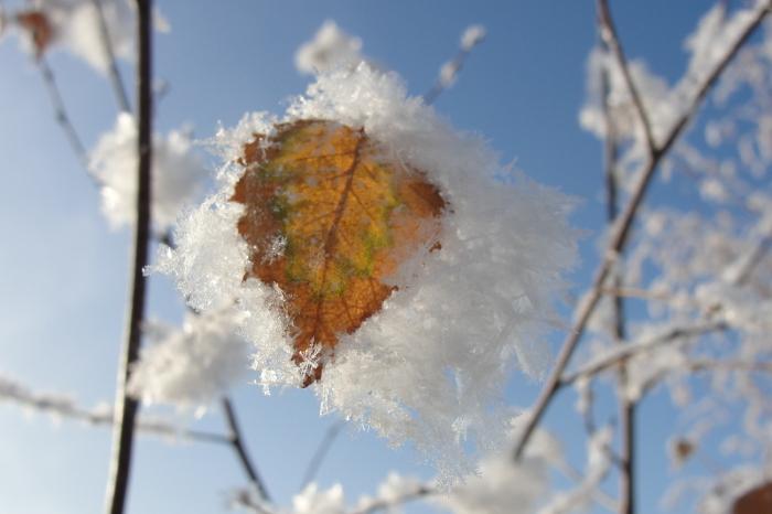 В ноябре крестьянки бежали в лес, чтобы посмотреться в березовый листочек, покрытый инеем. /Фото: cdn.photosight.ru