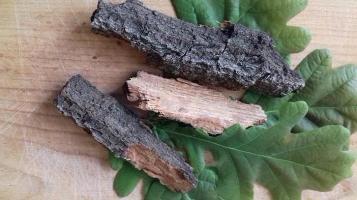 Отвар из коры дуба использовался в древности и сегодня применяется как противовоспалительное средство. /Фото: pbs.twimg.com
