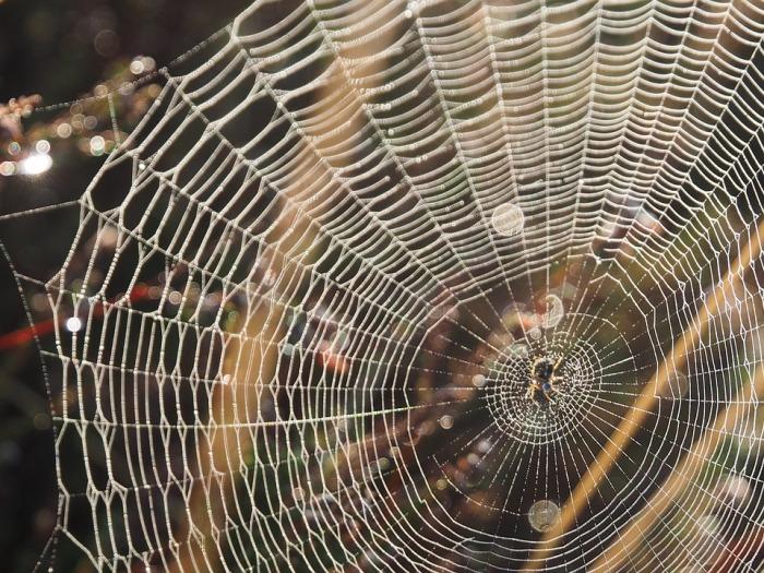 При помощи пауков проверяли место для будущей постройки. /Фото: cdn.pixabay.com