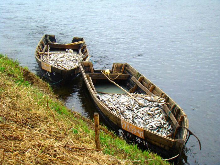 Главное издревле занятие ительменов – рыбная ловля. /Фото: photar.ru