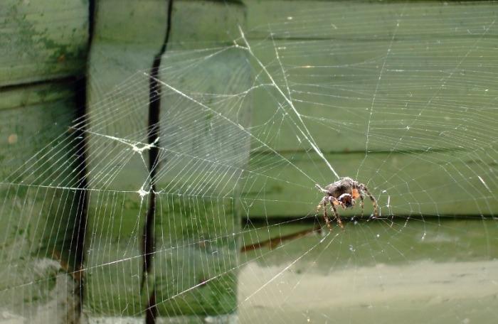 Приснившийся паук означал возможные несчастья и неприятные события. /Фото: s-zametki.ru