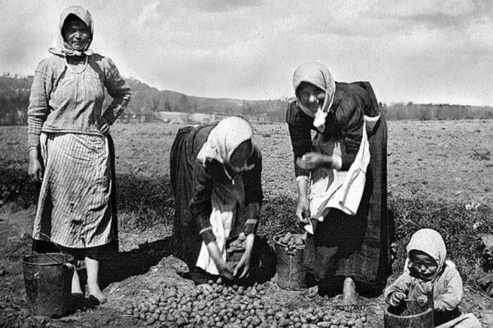 Пока власть наслаждалась деликатесами из картофеля, среди крестьян нарастало недовольство. /Фото: sensum-club.pro