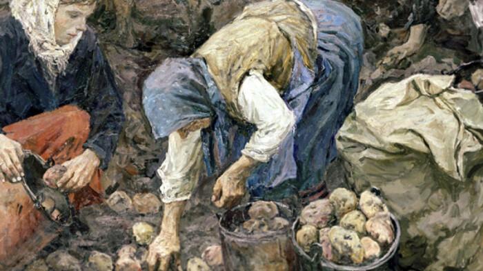 В 1840 году на Руси начались картофельные бунты. /Фото: dsnews.ua