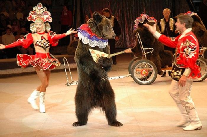 Медведи были и остаются талантливыми артистами. /Фото: studio-prazdnik.ru