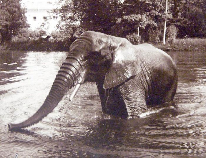 Купание слона в пруду Александровского парка. 1914 год./Фото: к-я.рф