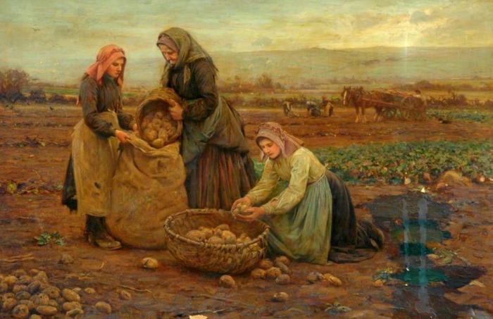 Крестьяне дали картофелю прозвище «чертово яблоко». /Фото: nlo-mir.ru