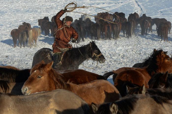 Алтайский пастух./Фото: sputnik.kg