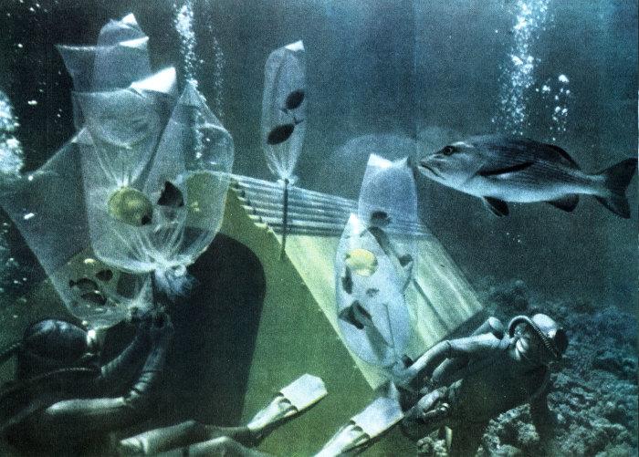«Преконтинент-2» Жака-Ива Кусто./Фото: www.mirf.ru