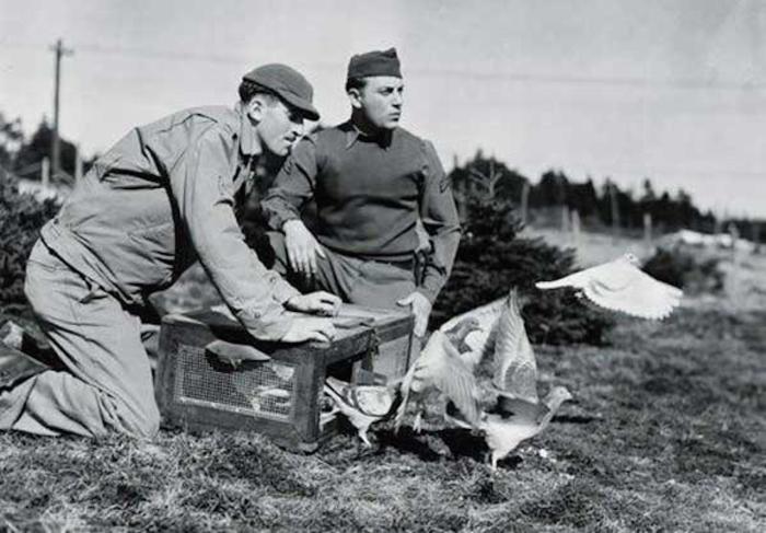 Солдаты выпускают голубей из переносного садка./Фото: topplus.vn