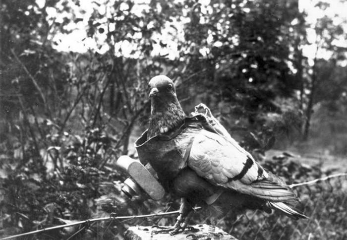 Голубей оснащали фотокамерами для снимков с воздуха (1907 год).