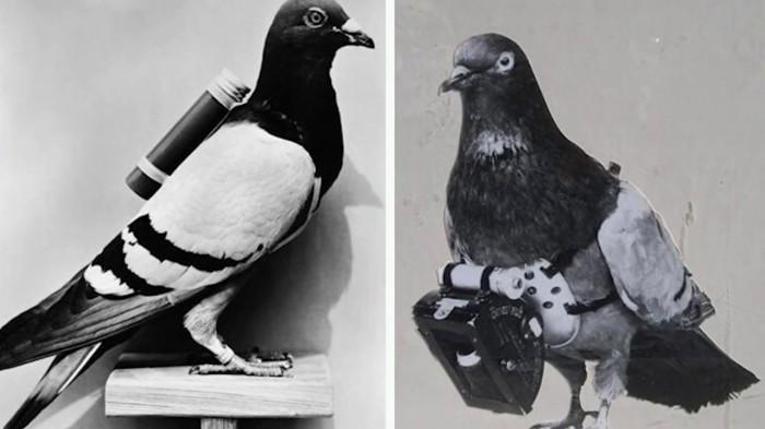 Почтовых голубей активно использовали в Великой отечественной войне./Фото: i.ytimg.com