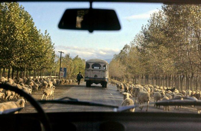 В Грузии комфортно себя чувствовали не только люди./Фото: branibor.blogspot.com