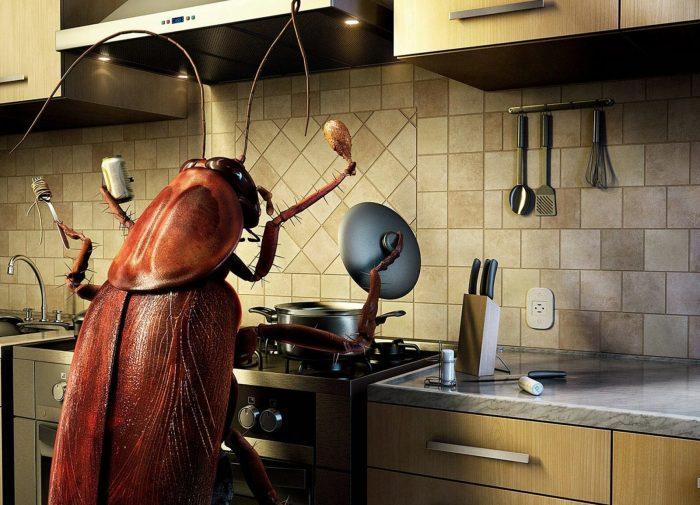 Сегодня вряд ли таракана будут считать хозяином дома./Фото: magiya.guru