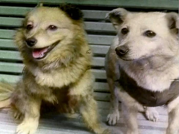 Погибшие собаки при неудачном старте в 1960./Фото: upload.wikimedia.org