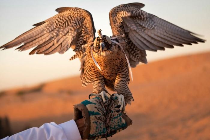 В соколиной охоте используются птицы различных хищных пород./Фото: petshoptop.ru