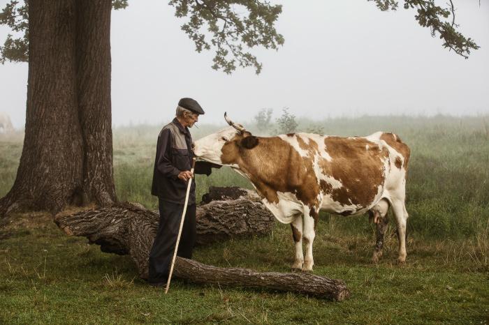 Пастух, современное фото./Фото: ii1.photocentra.ru