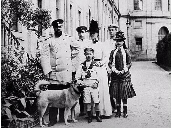 Лайка Камчатка — любимая собака Великого императора России Александра III./Фото: pics.meshok.net
