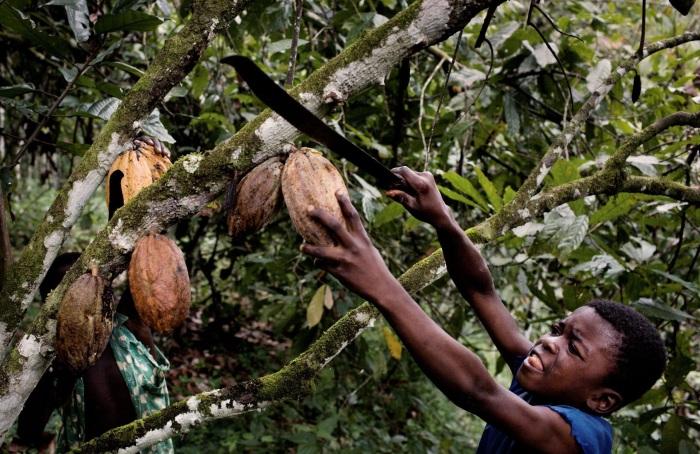 Большинство детей в Гане работают на плантациях по сбору какао-бобов и арахиса./Фото: www.notyourmotherscookbook.com