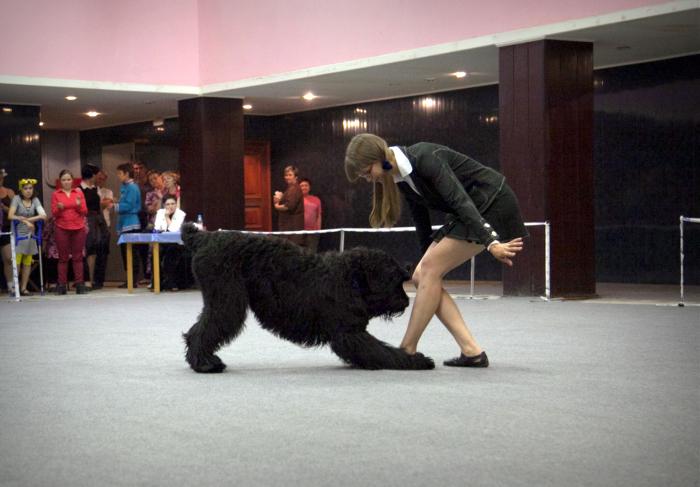 «Осенний вальс» – соревнования по танцам с собаками, Челябинск./Фото: z73.d.sdska.ru