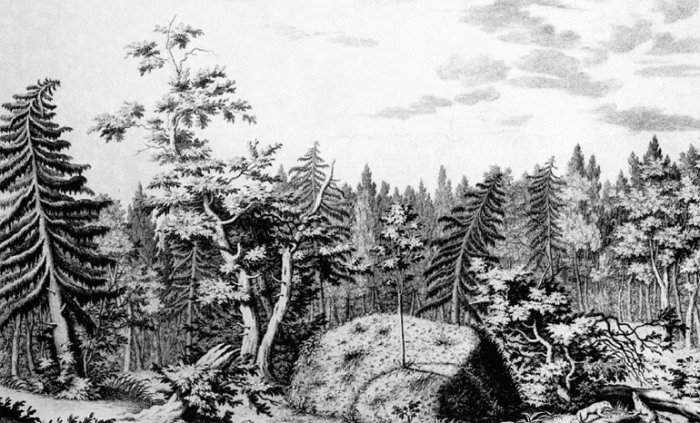 Гром-камень в лесу. Гравюра Якоба ван дер Шлея