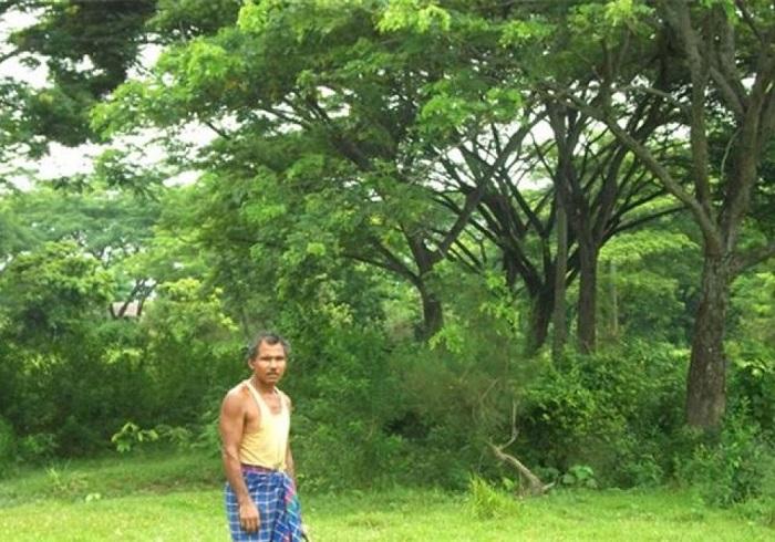 Джадав и его лес.