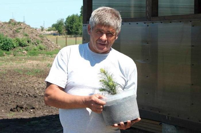 Иван Санжаров вырастил сотни тысяч кедровых саженцев для того, чтобы сажать леса или озеленять города.