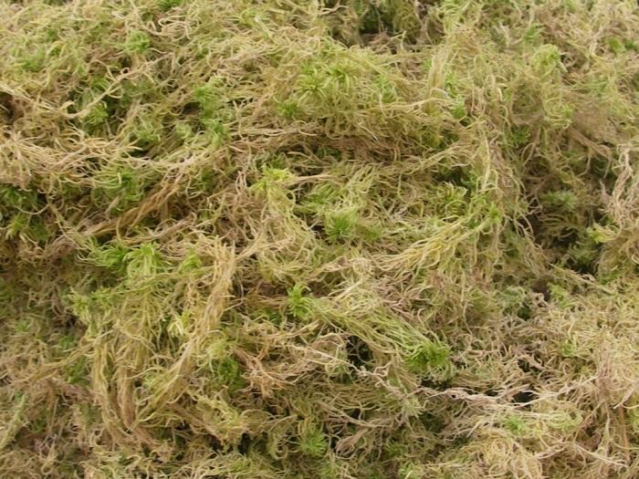 Сухой мох идеален для соблюдения чистоты.
