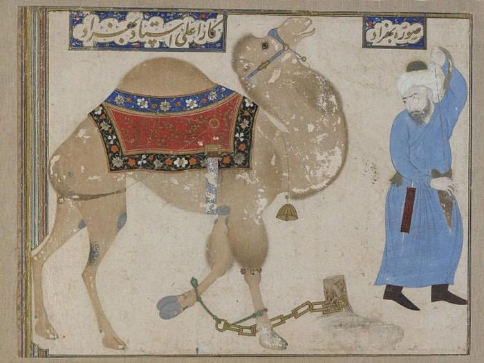 Естественно, изрядная доля юмора всегда заключалась именно в том, что лиса совсем не похожа на верблюда.