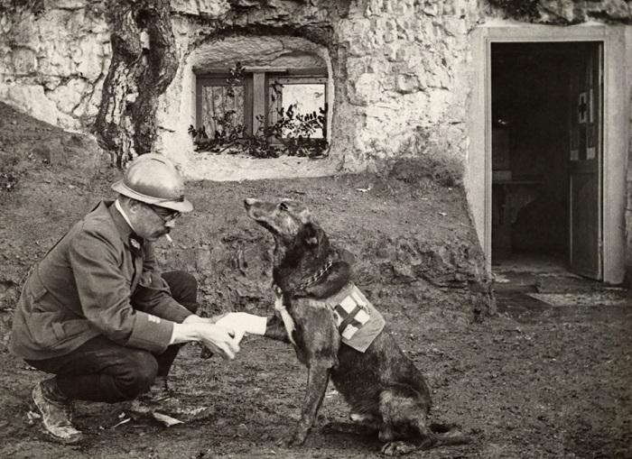 Французский солдат оказывает помощь собаке-санитару.
