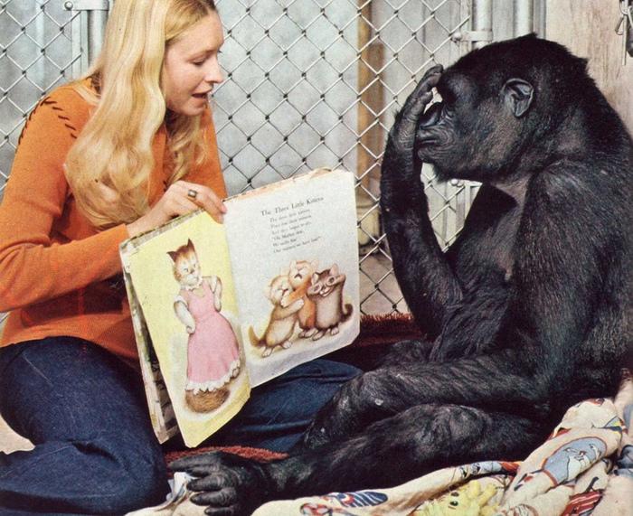 Коко (умерла в 2018) обожала котят и однажды долго выпрашивал себе одного.