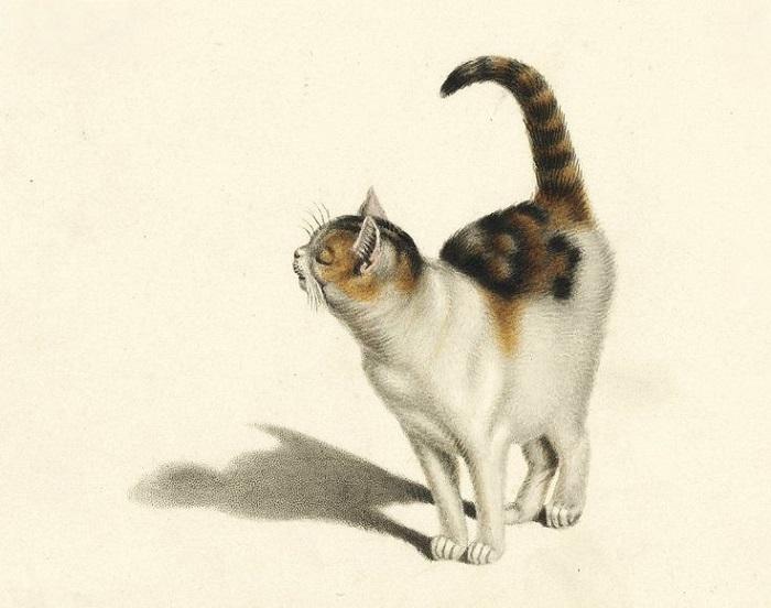 Минд всю жизнь рисовал котов и считал это лучшей из профессий.