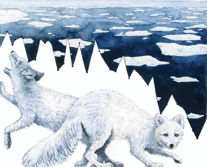 Песцы живут в покрытых снегами и льдами землях, они приспособлены к ним и в более тёплых областях проигрывают в конкуренции другим хищникам. График показывает, как уменьшение снежно-ледяного покрова с 1980 года оставляет песцам всё меньше места для выживания. Они выглядят загнанными в угол, и неудивительно.