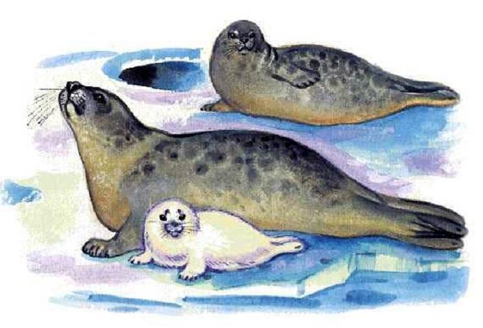 Норвежцы буквально истребляли тюленей на восточных берегах.