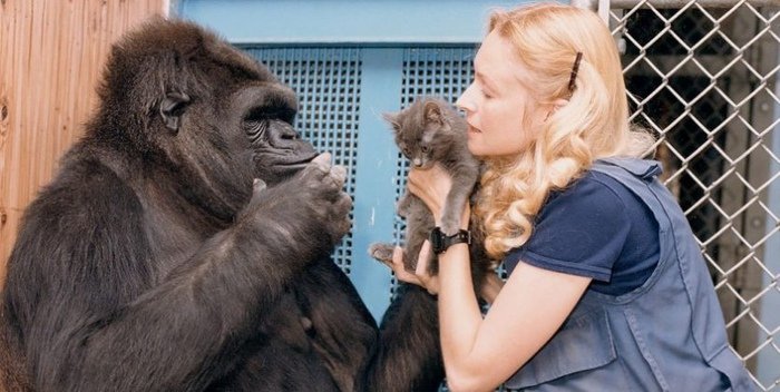 Коко всегда мечтала о детях и обожала котят.