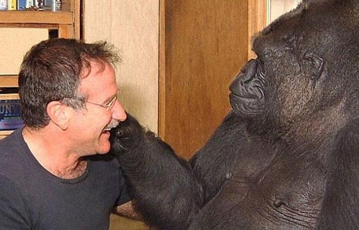 Планета (говорящих) обезьян: Как люди учили и почему обезьяны научились говорить.