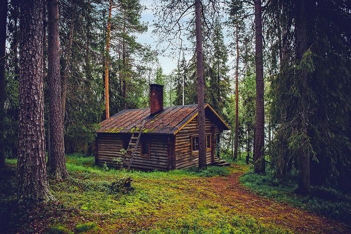 Кроме озёр, в Финляндии много сосновых лесов.